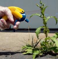 Защита от сорняков (Гербициды)