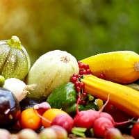 Семена овощей и пряных культур оптом