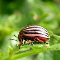Защита от вредителей (Инсектициды)