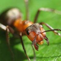 Средства защиты от муравьев, мух, слизней, комаров