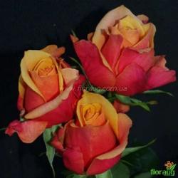 Роза Черри Бренди (Cherry Brendy)